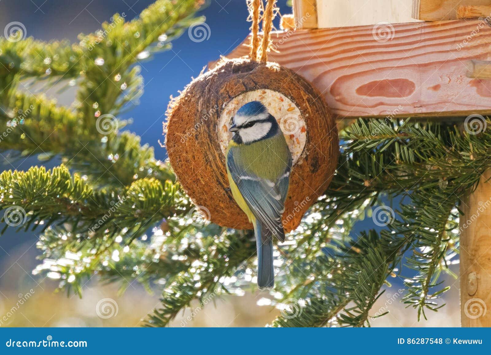 Fat blue bird cartoon vector 74266371 for Whole coconut bird feeders