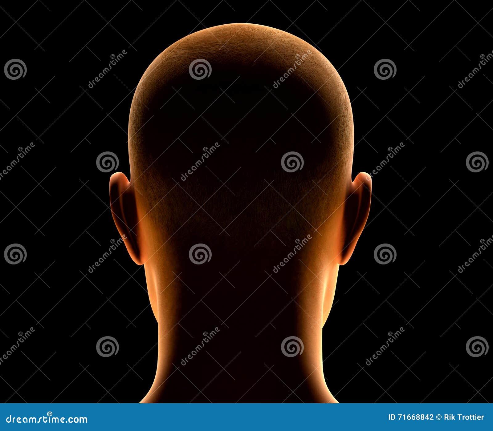 Back Of Head Stock Illustration Illustration Of Disdain 71668842