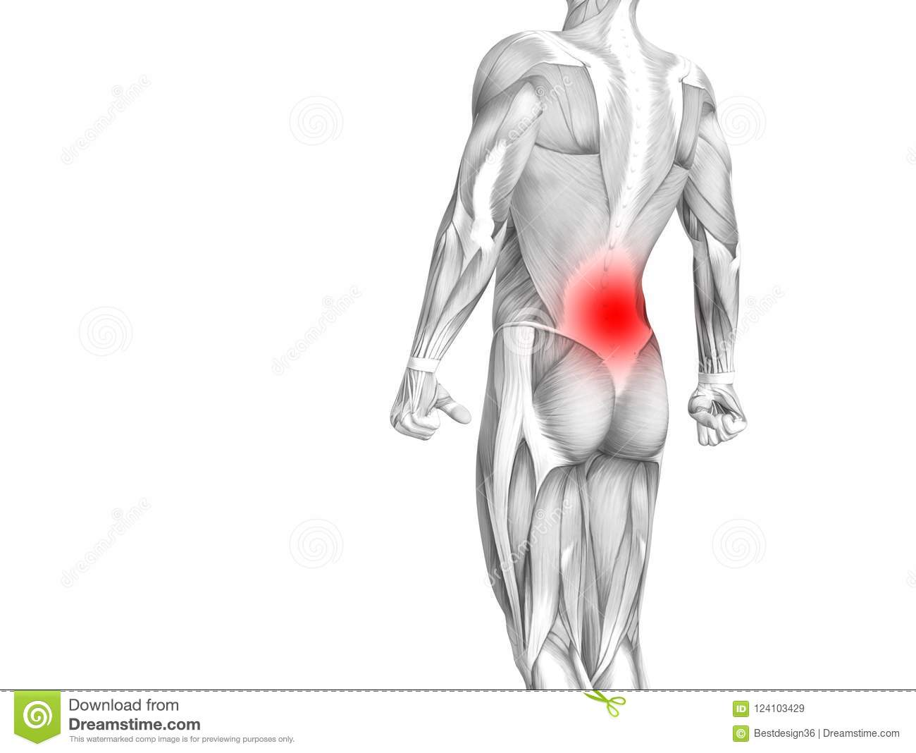 Back Human Anatomy With Red Hot Spot Inflammation Stock Illustration