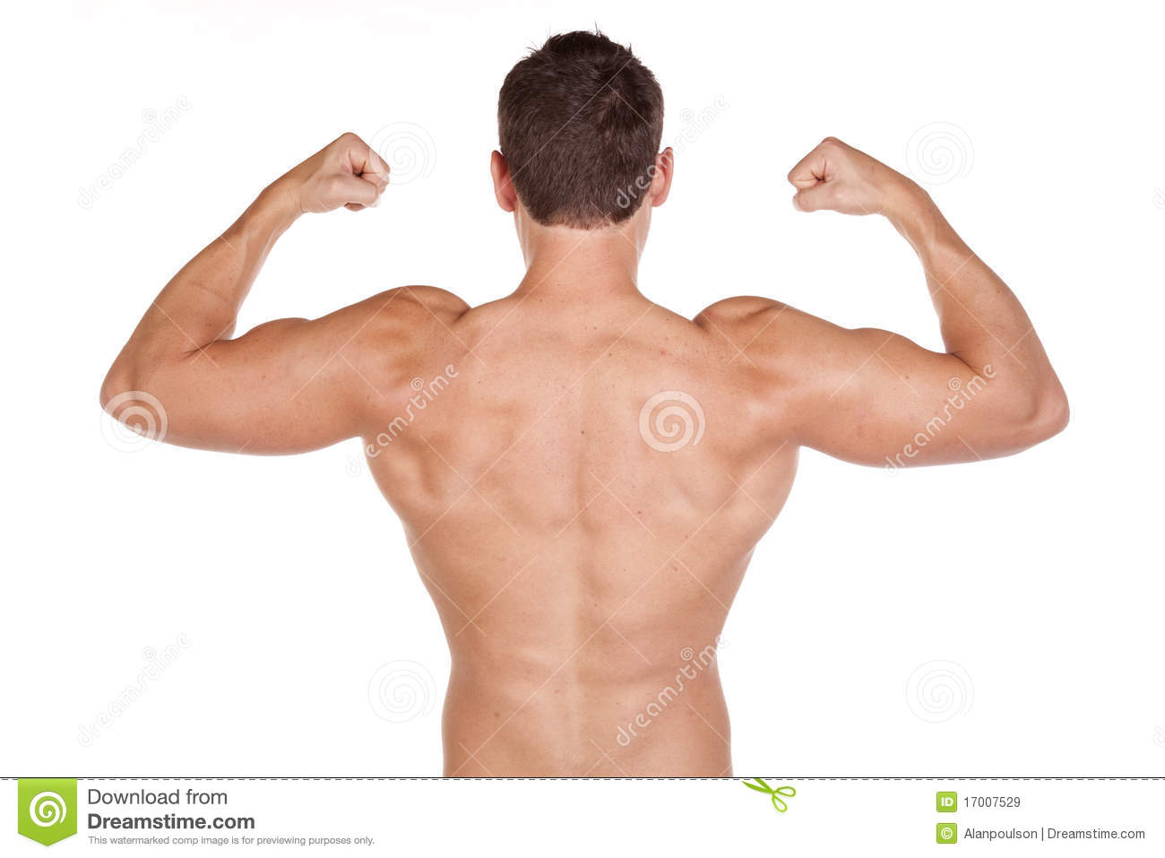 Back Muscles Royalty Free Stock Images