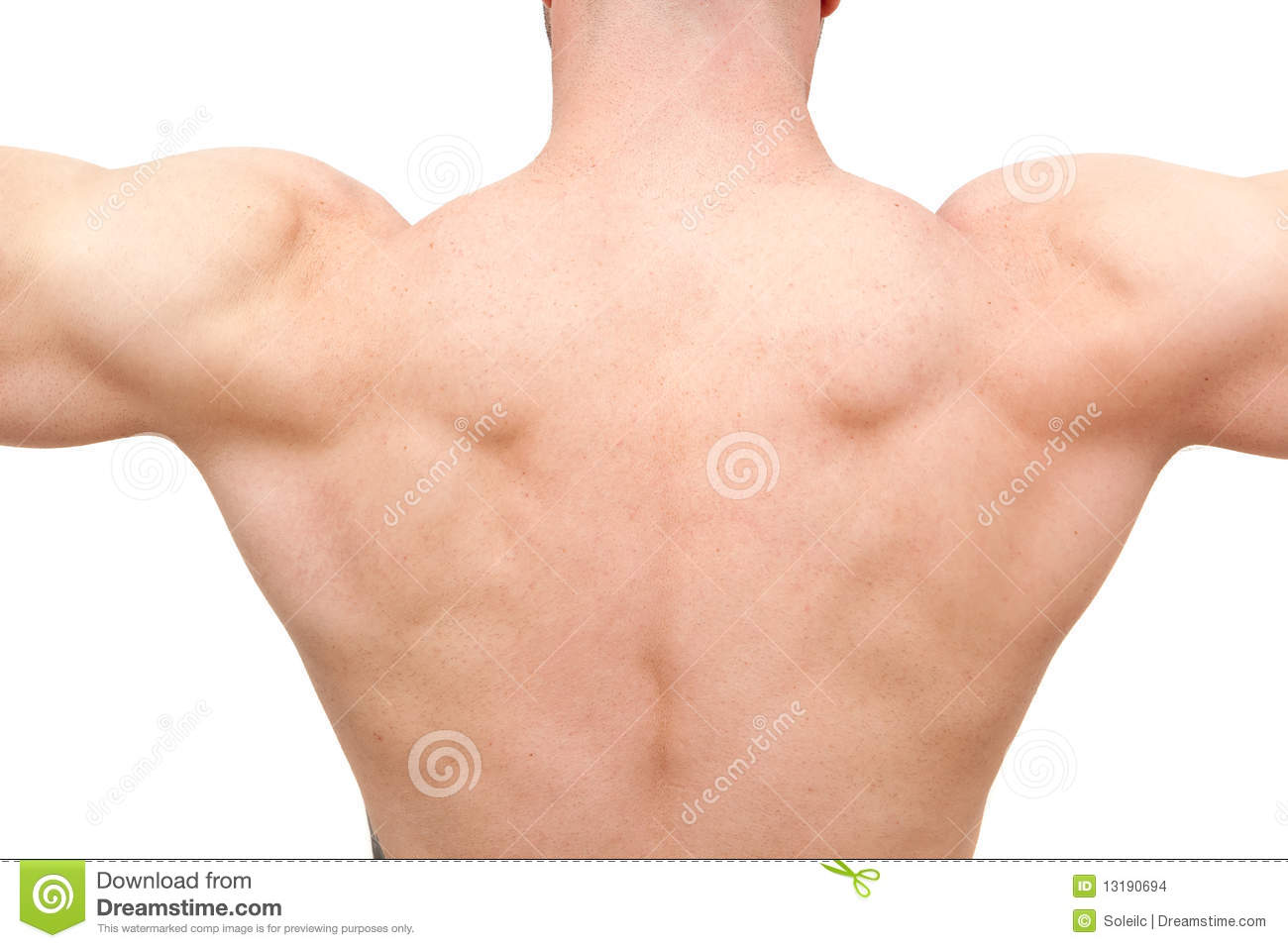 Back Of Muscular Body Builder Man Stock Photo - Image
