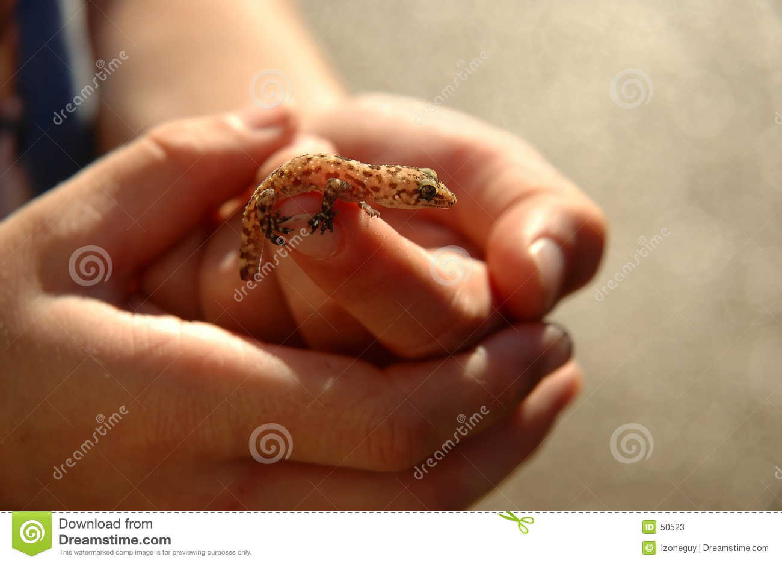 Back tänd salamander
