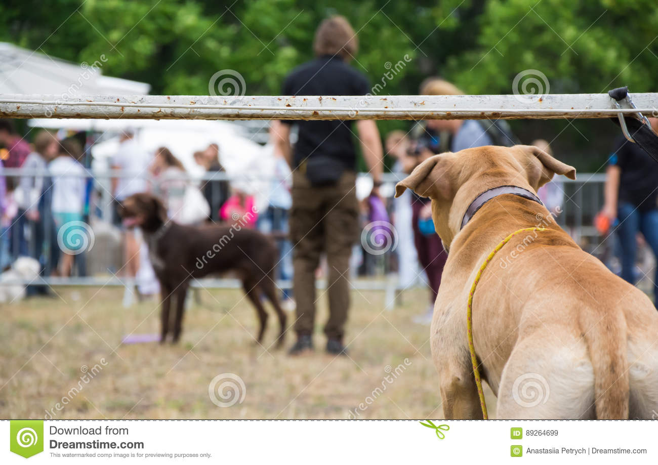 Back view of a dog watching dogs and people taking part in dog show competition
