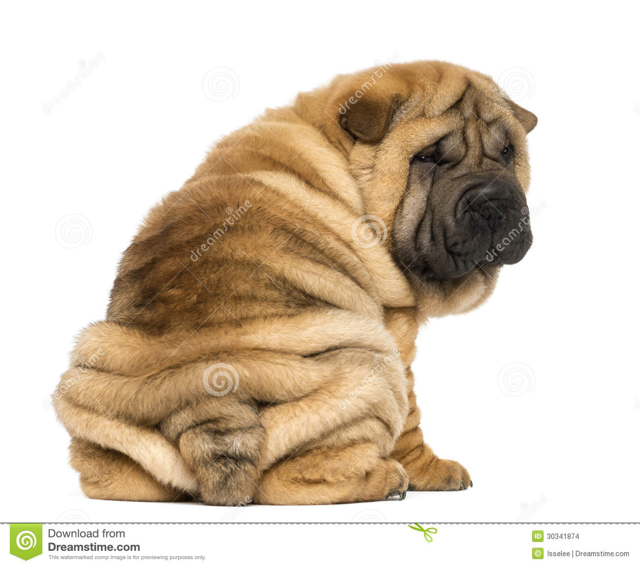 download shar pei puppies - photo #40