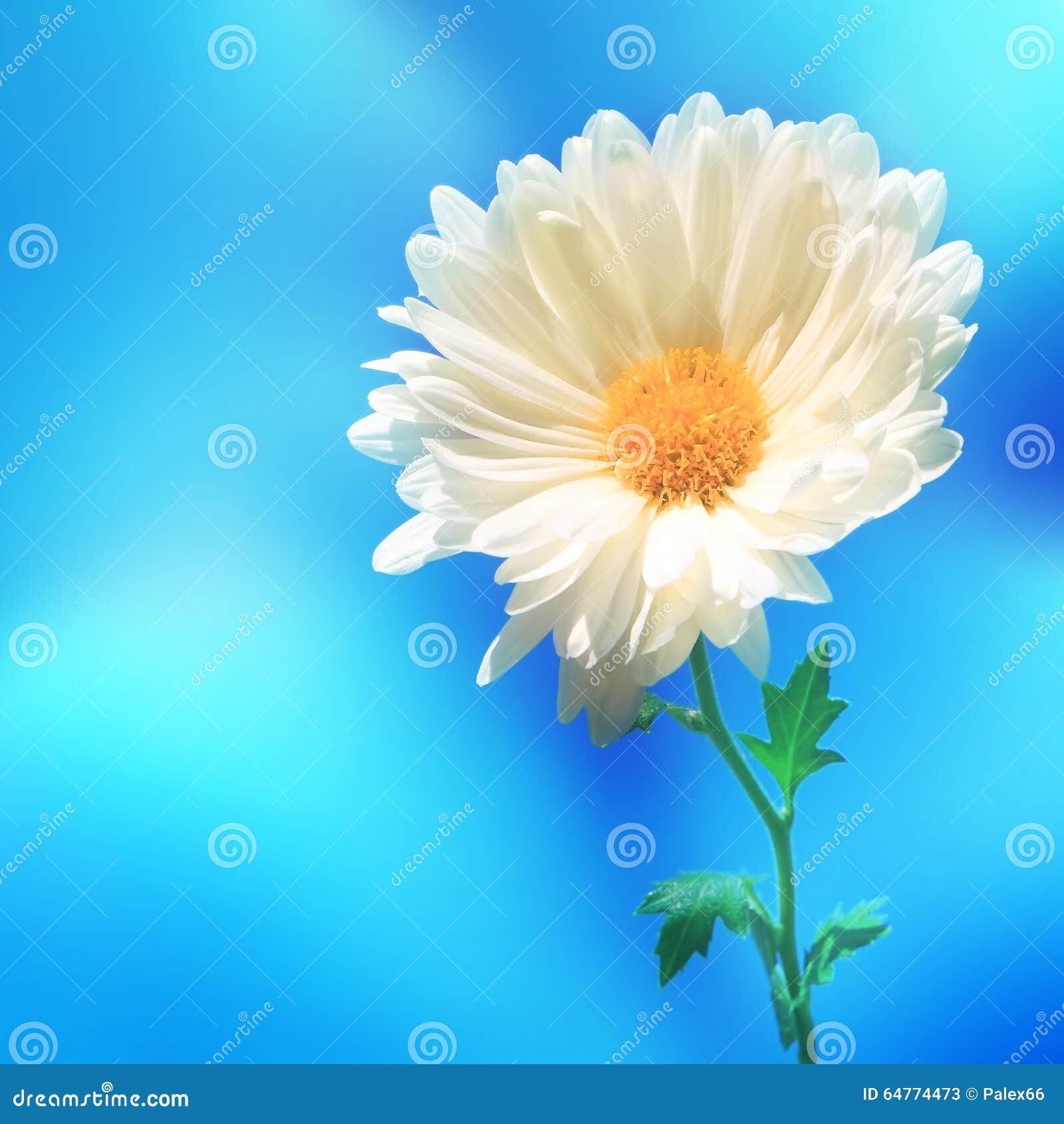 Backgound de tache floue de nature de fleur