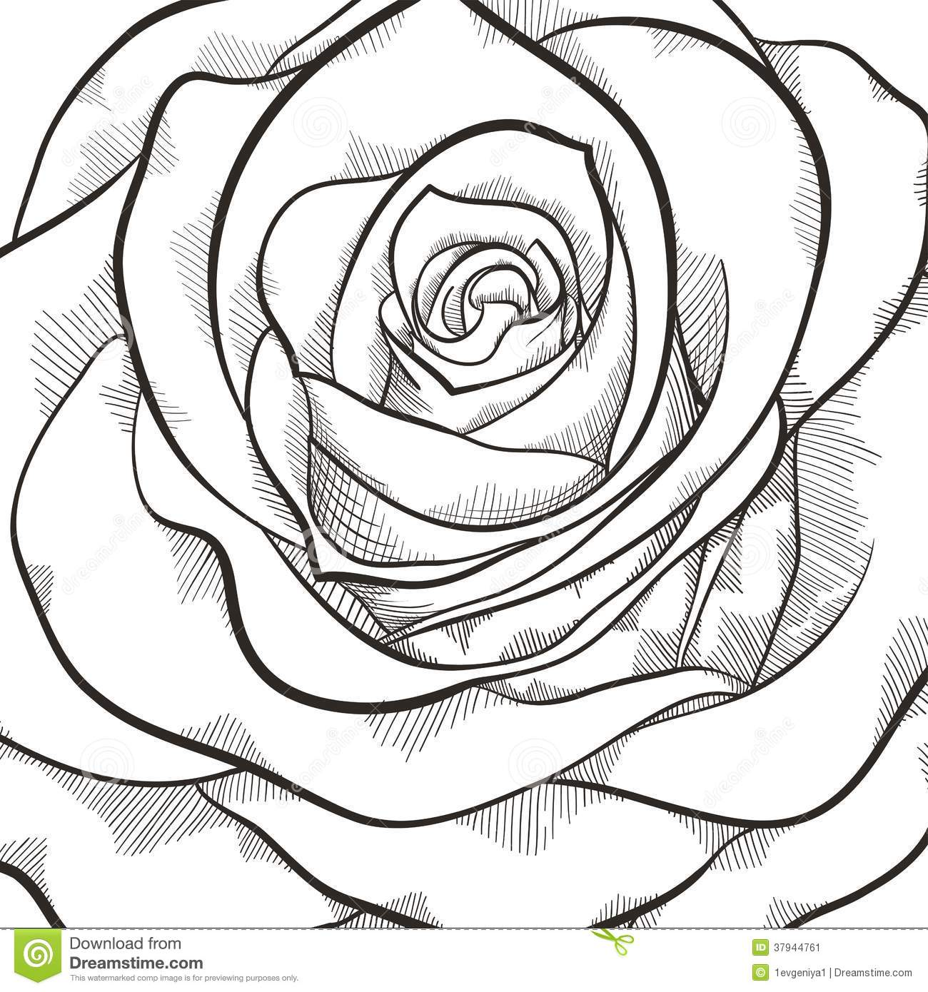 Simple Contour Line Drawings Of Flowers : Background with beautiful black and white rose stock