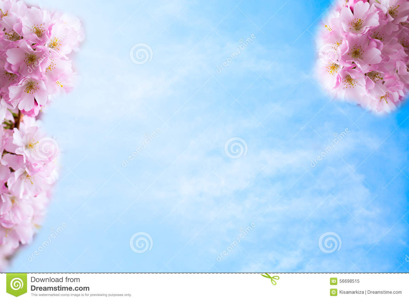 Background with beautiful pink cherry blossom or sakura flowers on background beautiful blossom blue cherry cloudy flower fluffy pink sakura dhlflorist Images
