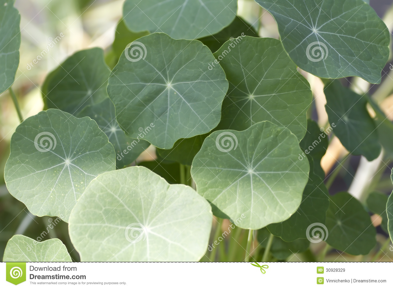 Background Of The Big Green Leaf Royalty Free Stock
