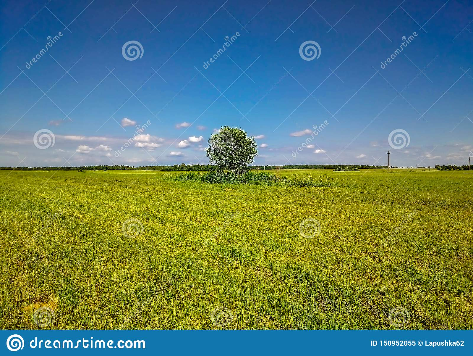 Background of blue sky and beveled grass