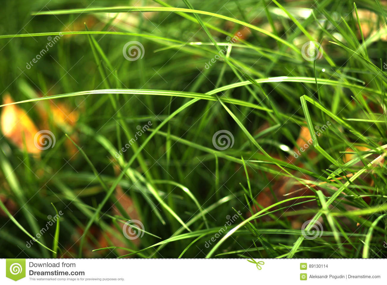 Background of bright green grass with yellow leaves