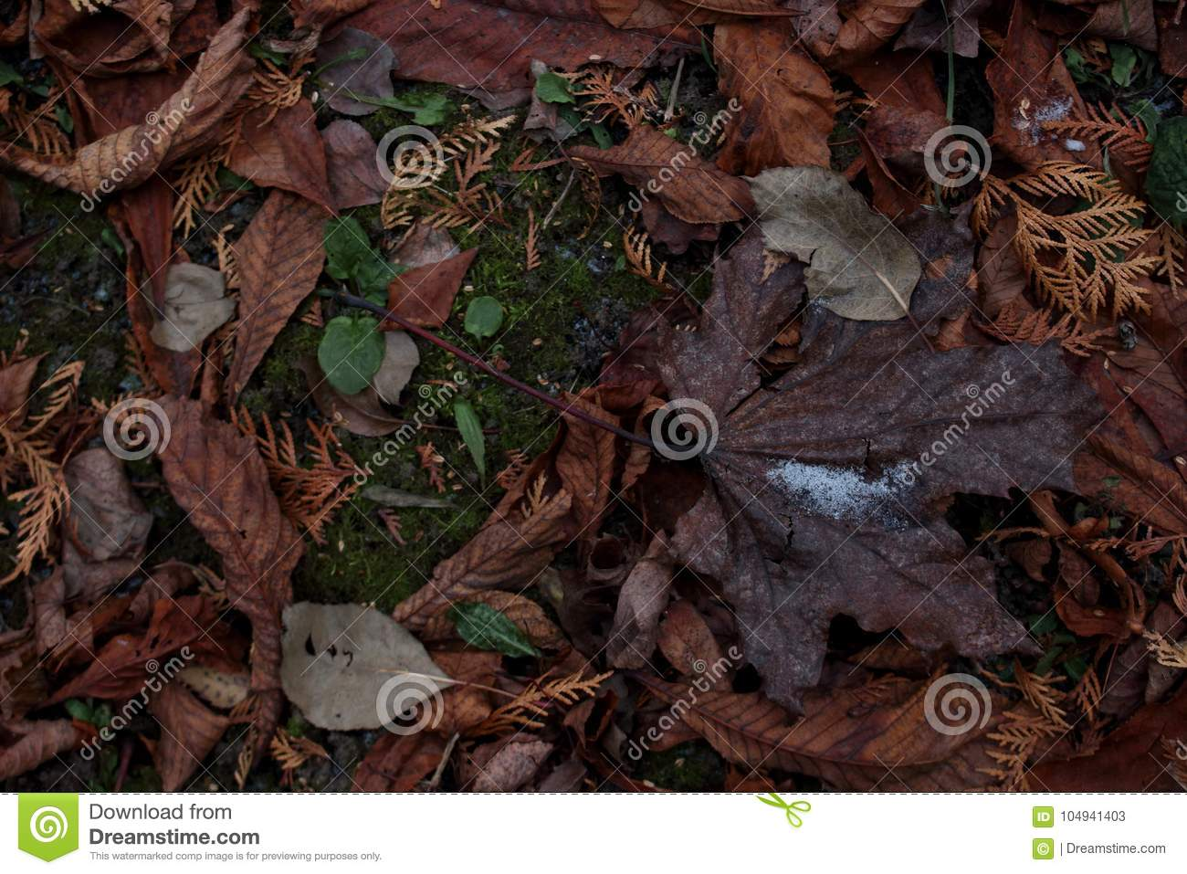 Background With A Brown Maple Leaf Lying On A Carpet Of