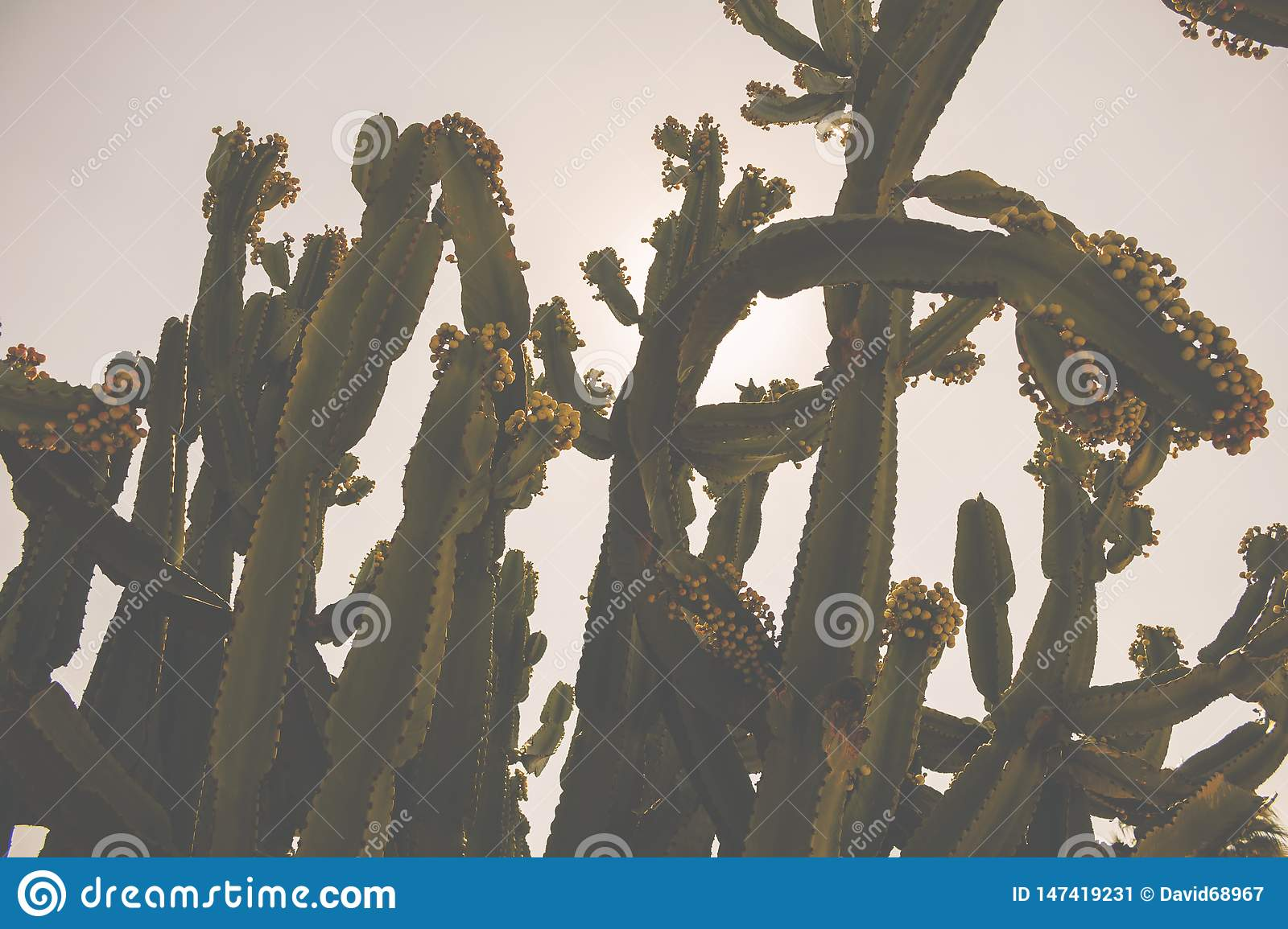 A background of cactus