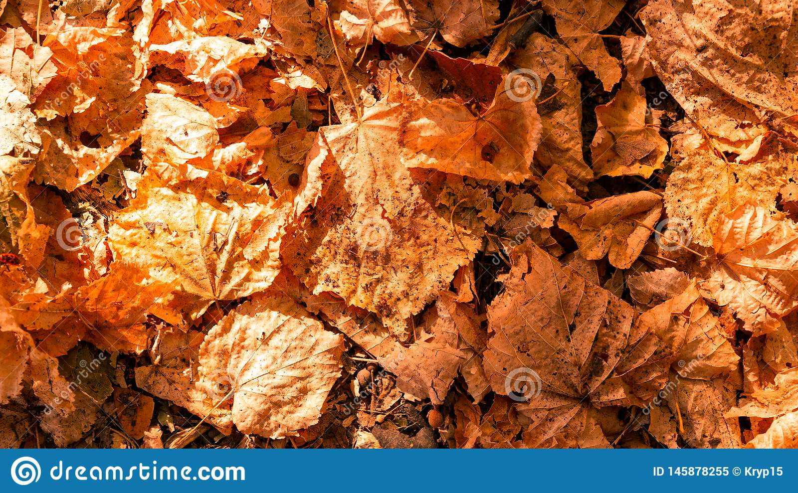 Background from colorful autumn leaves
