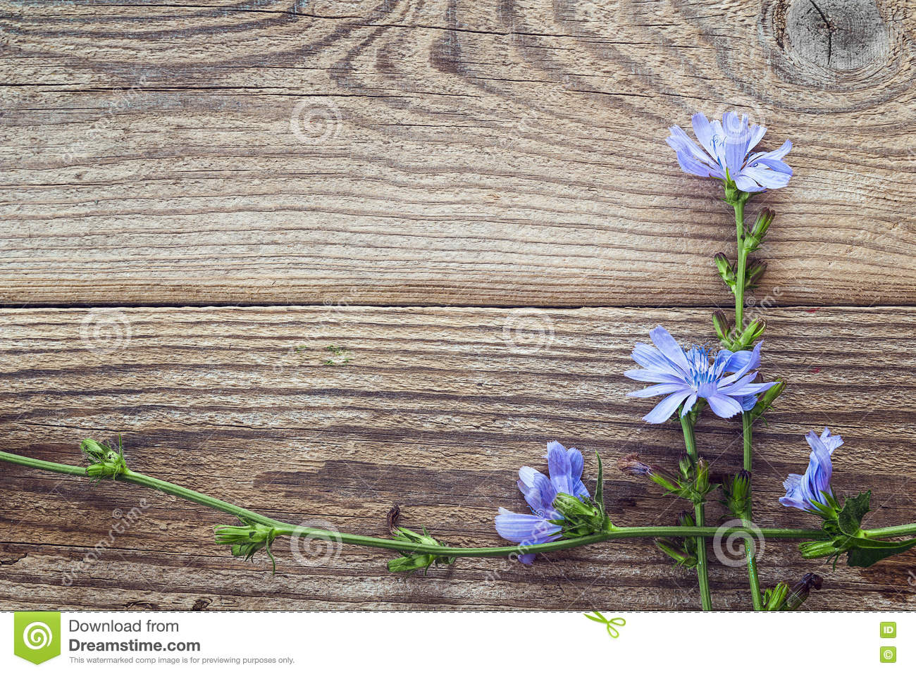 Background with flowers of chicory on the old wooden boards. Place for text.