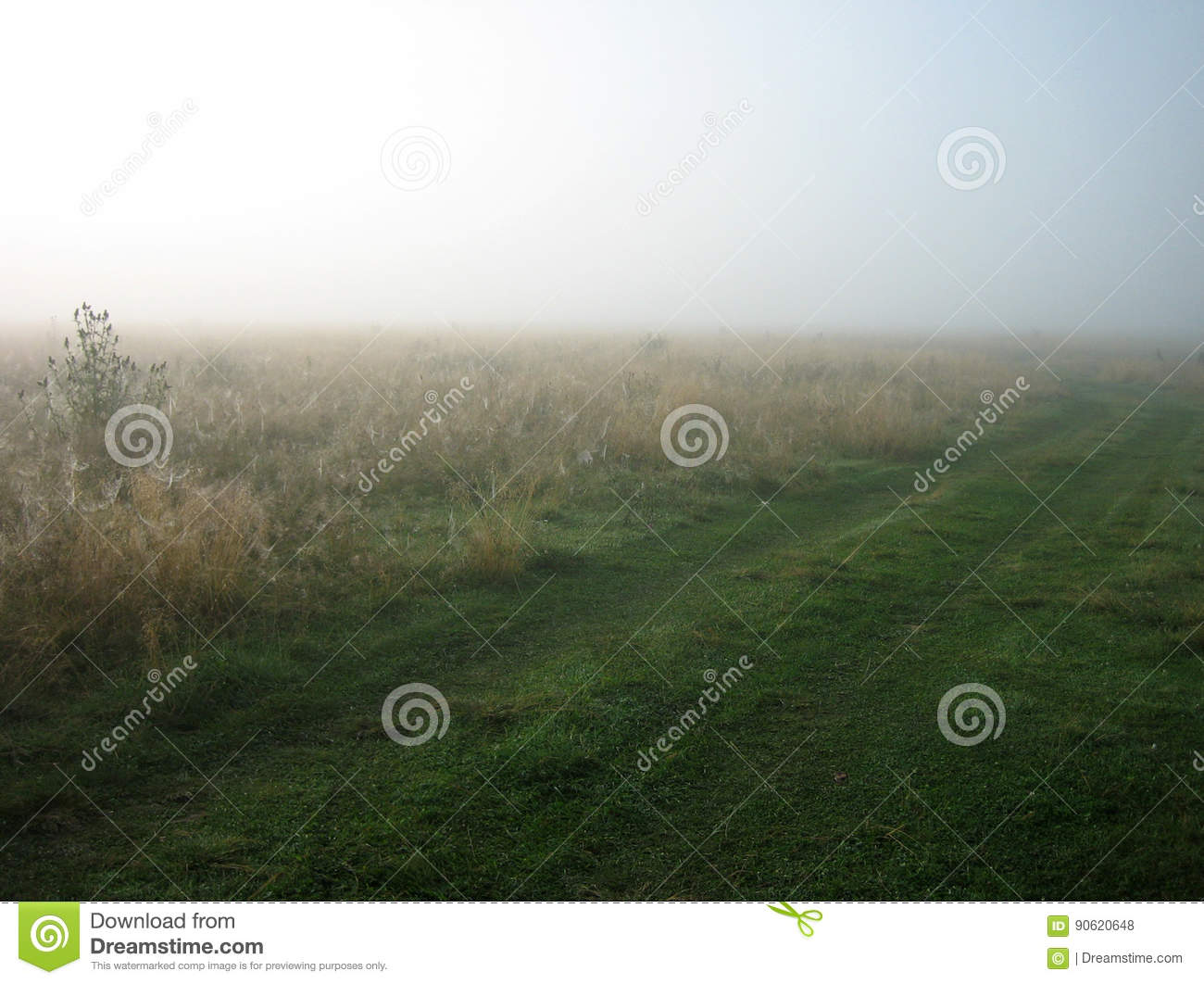 Download Background With Fog On The Field In Morning And Road Horizontal View