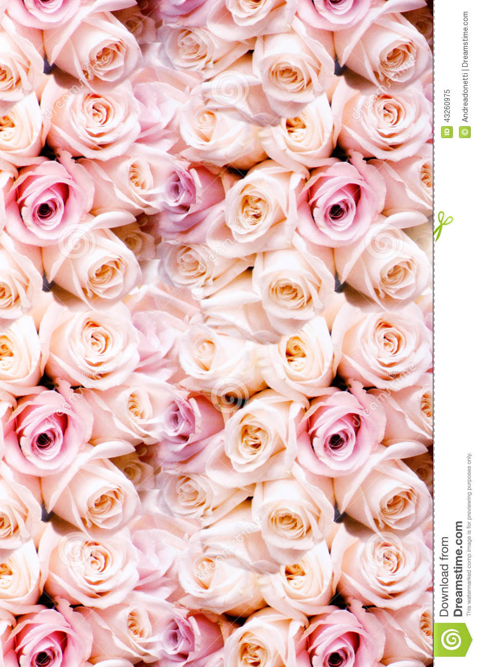 Background of fresh pink romantic roses