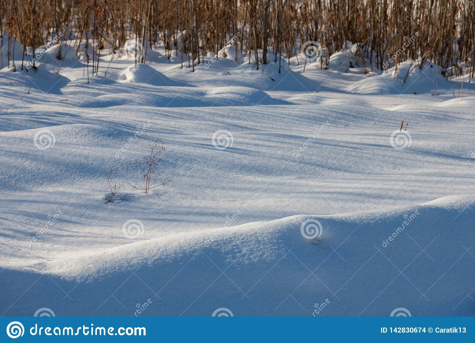Background of fresh snow texture in blue tone. Close up natural view