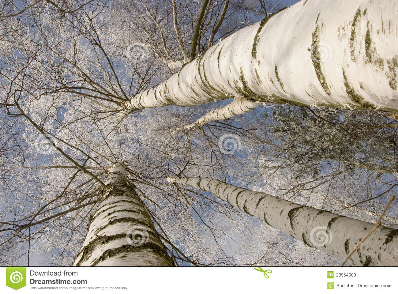 background of frosty birch tree trunk branch stock photo image 23954000