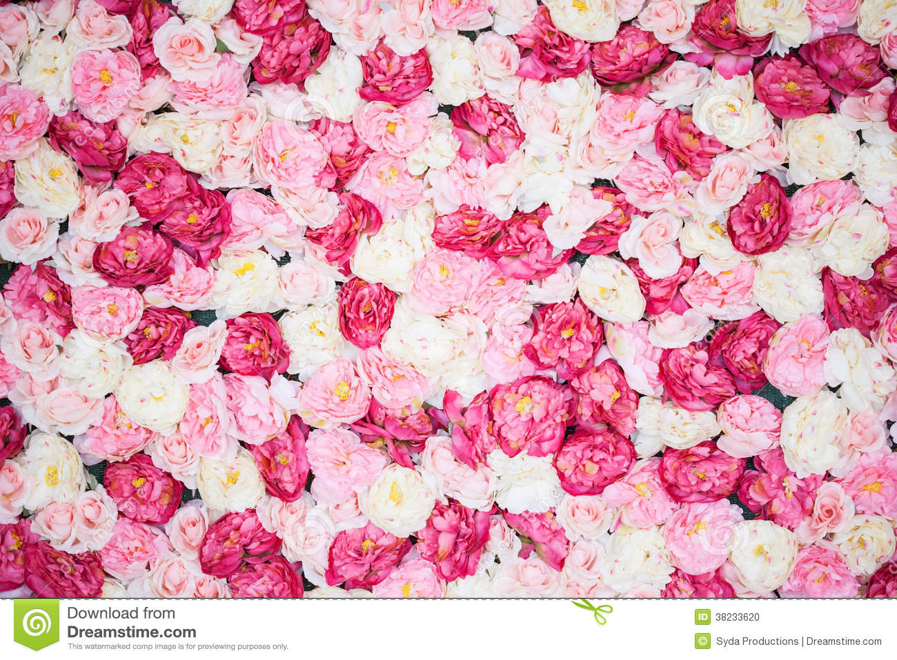 Background full of white and pink peonies stock photo image