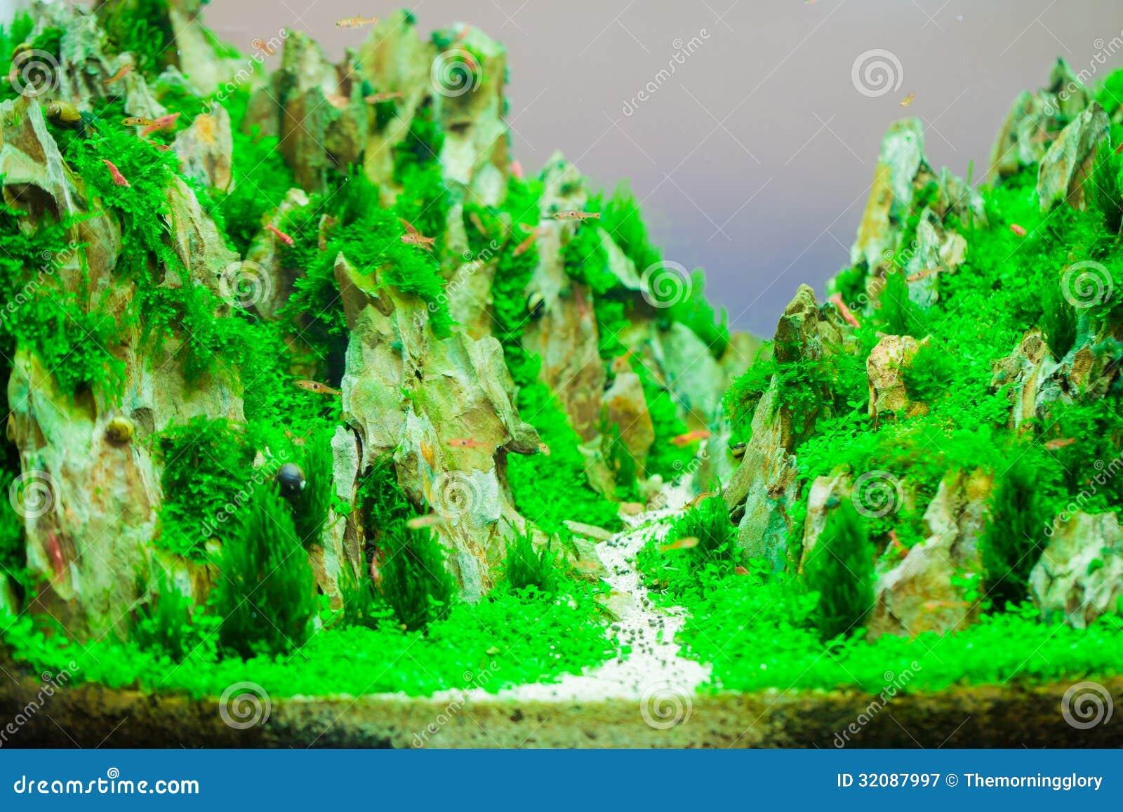 Background Of The Green Aquarium Seaweed Underwater Royalty Free Stock ...