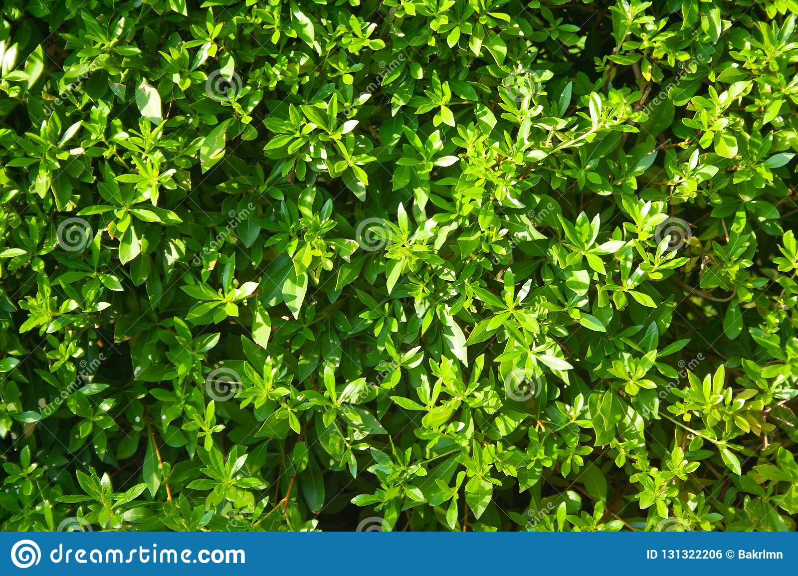 Background of green bush