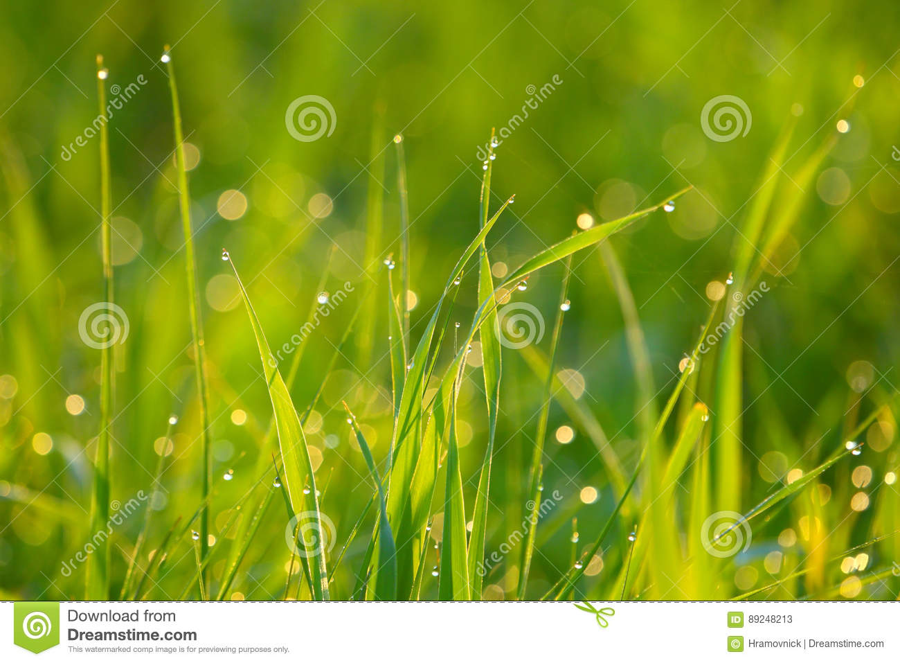Background of green grass with drops of dew.