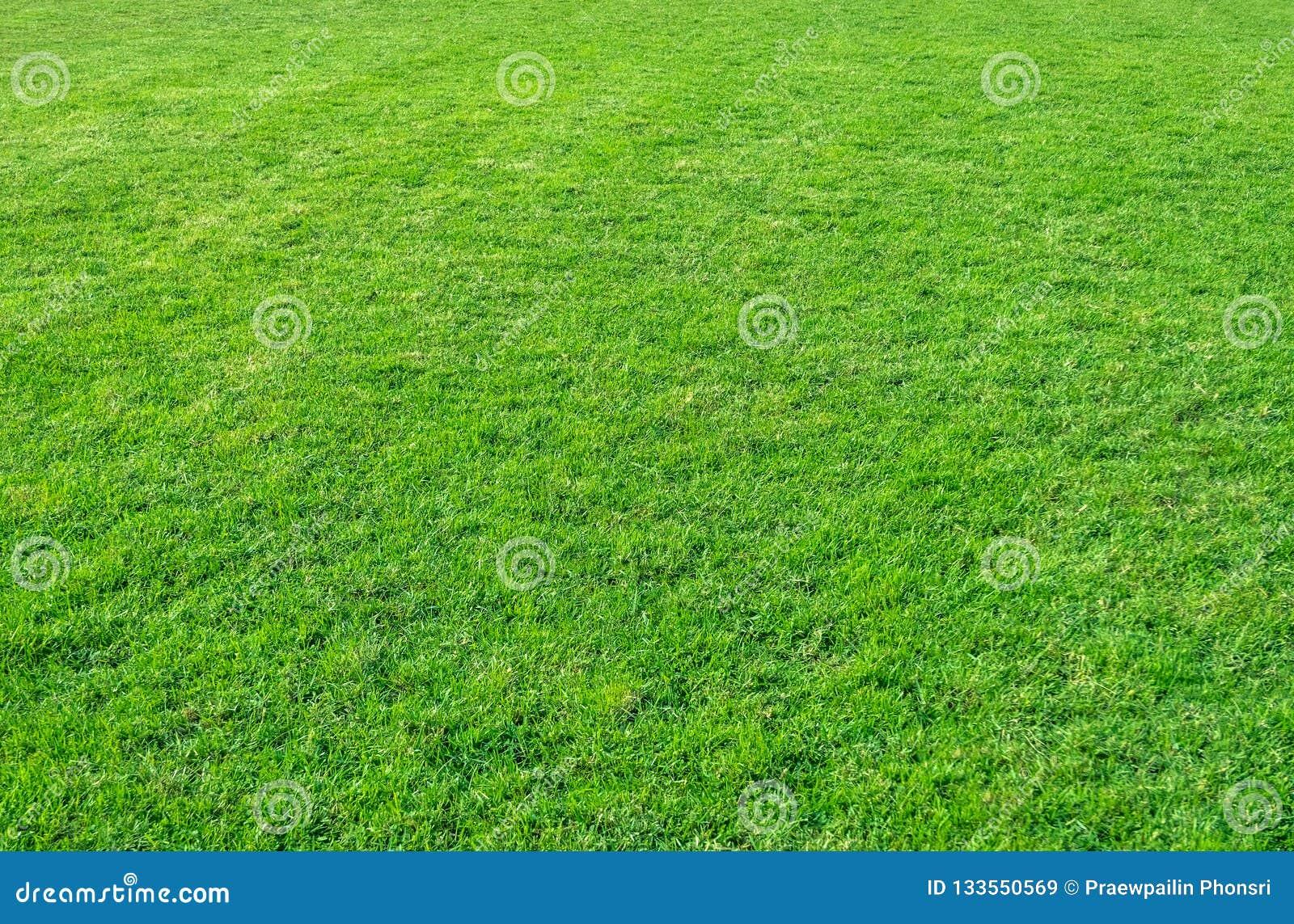 Background of green grass field. Green grass pattern and texture