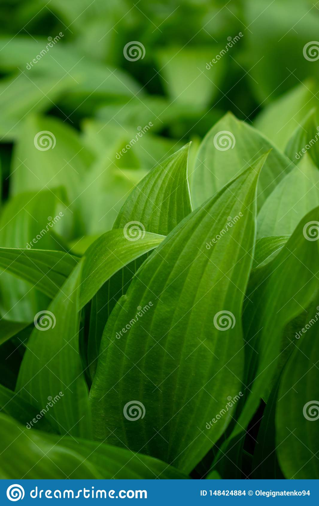 Background with green leaves and bokeh