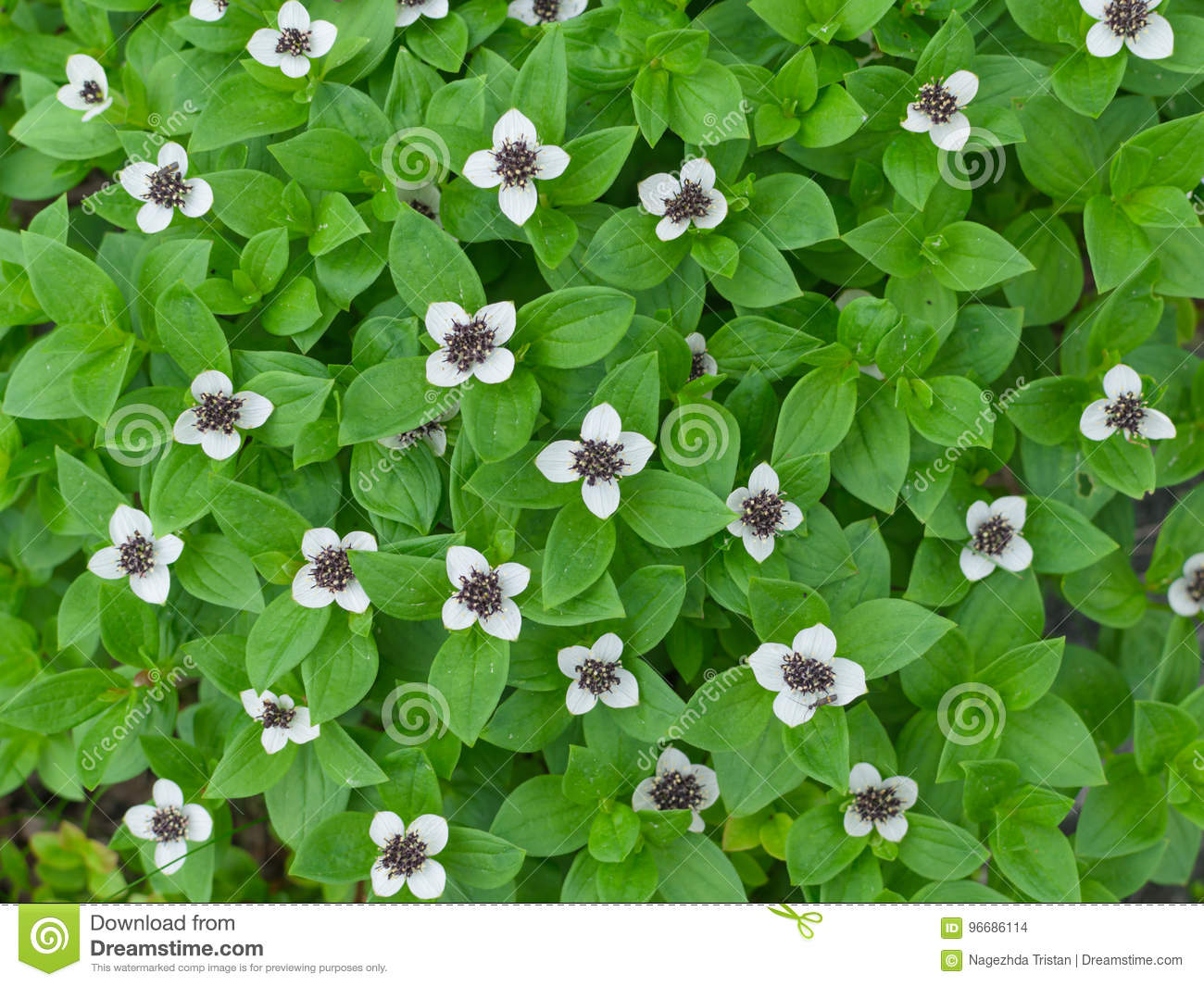 Background of green plants with small white flowers stock photo royalty free stock photo izmirmasajfo Images