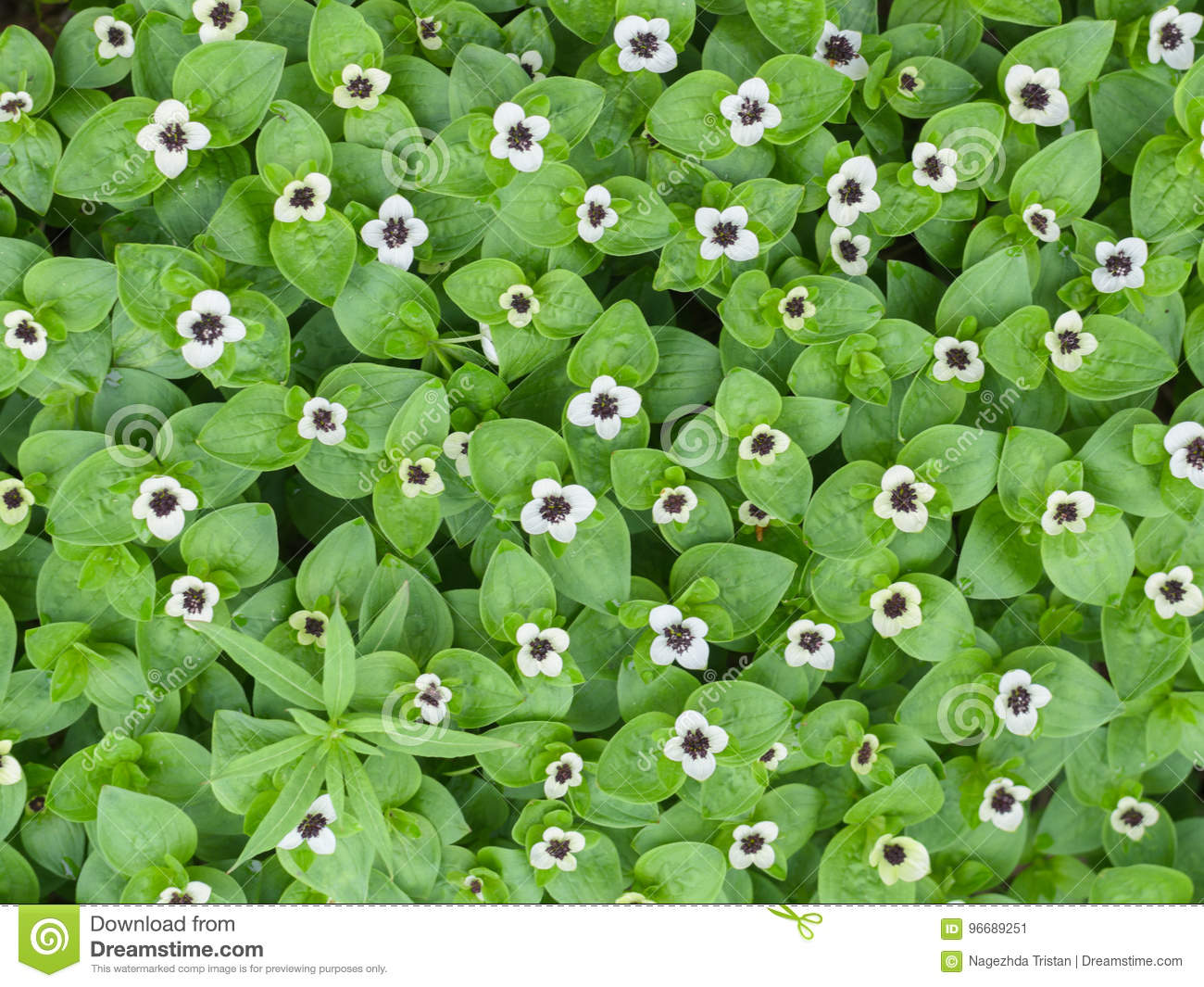 Background Of Green Plants With Small White Flowers Stock Image