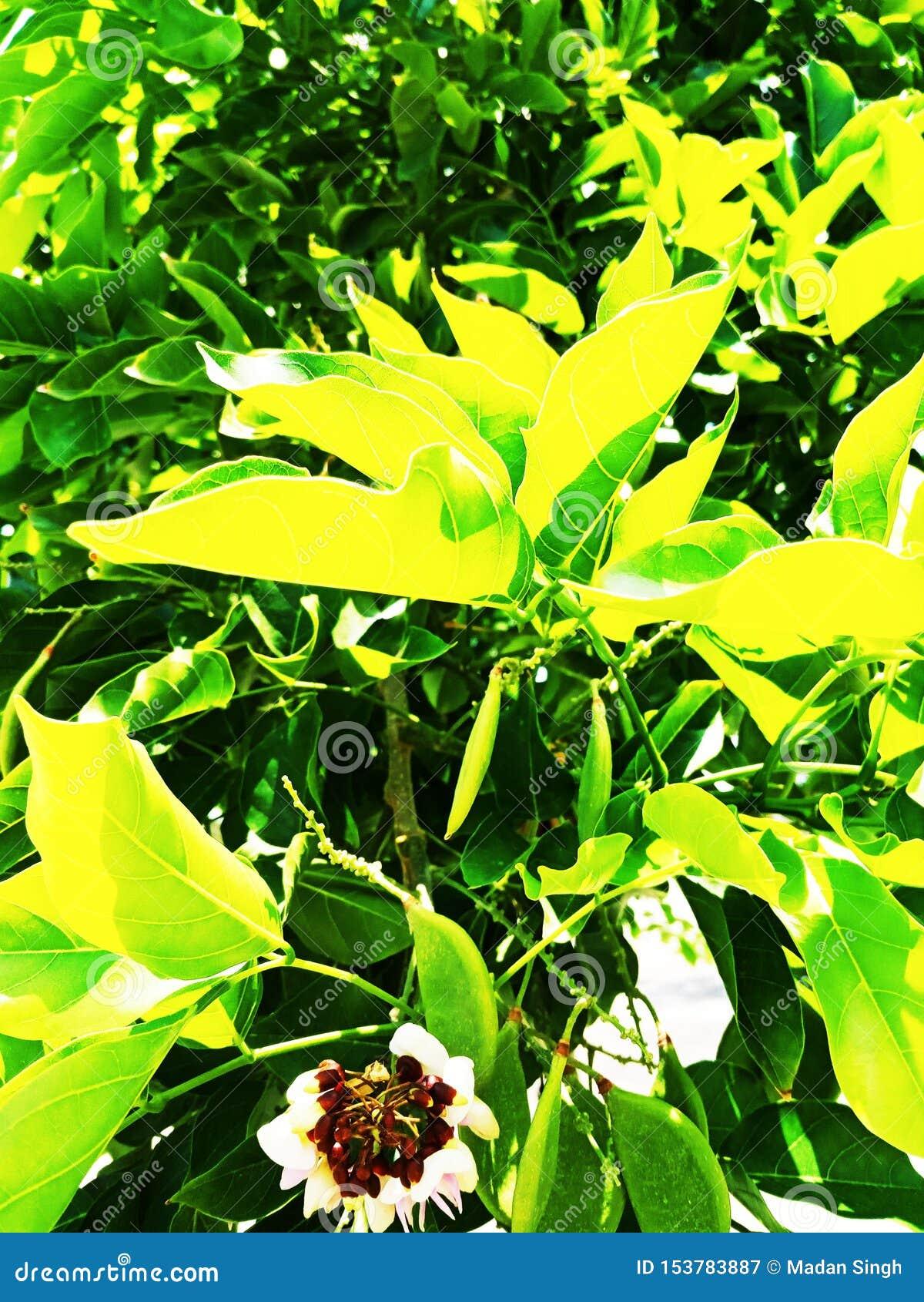 background green shamrock nature background, fresh green juicy color, shamrock plant - ImagefromIndia