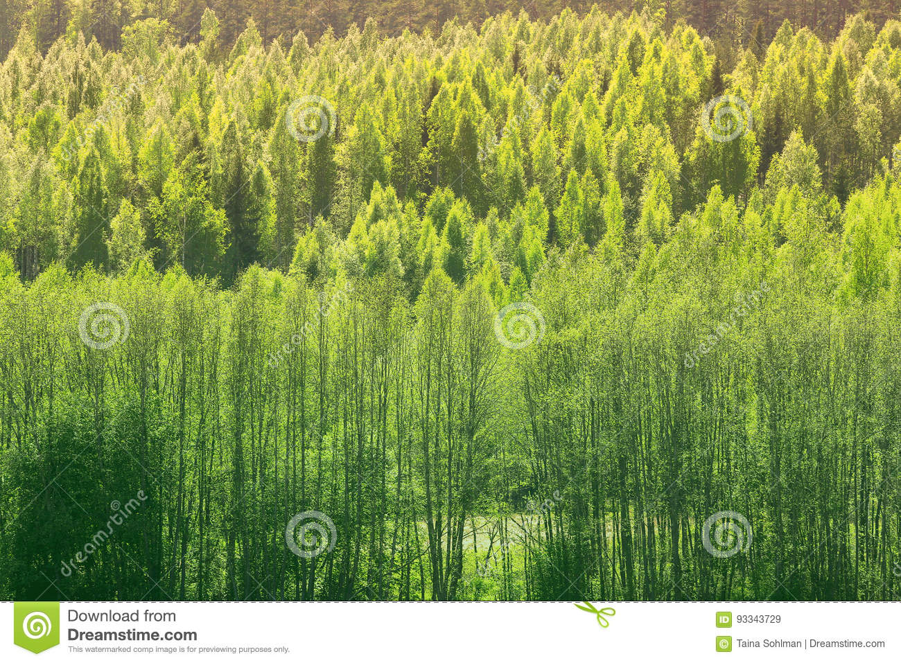background with green spring forest stock image image of