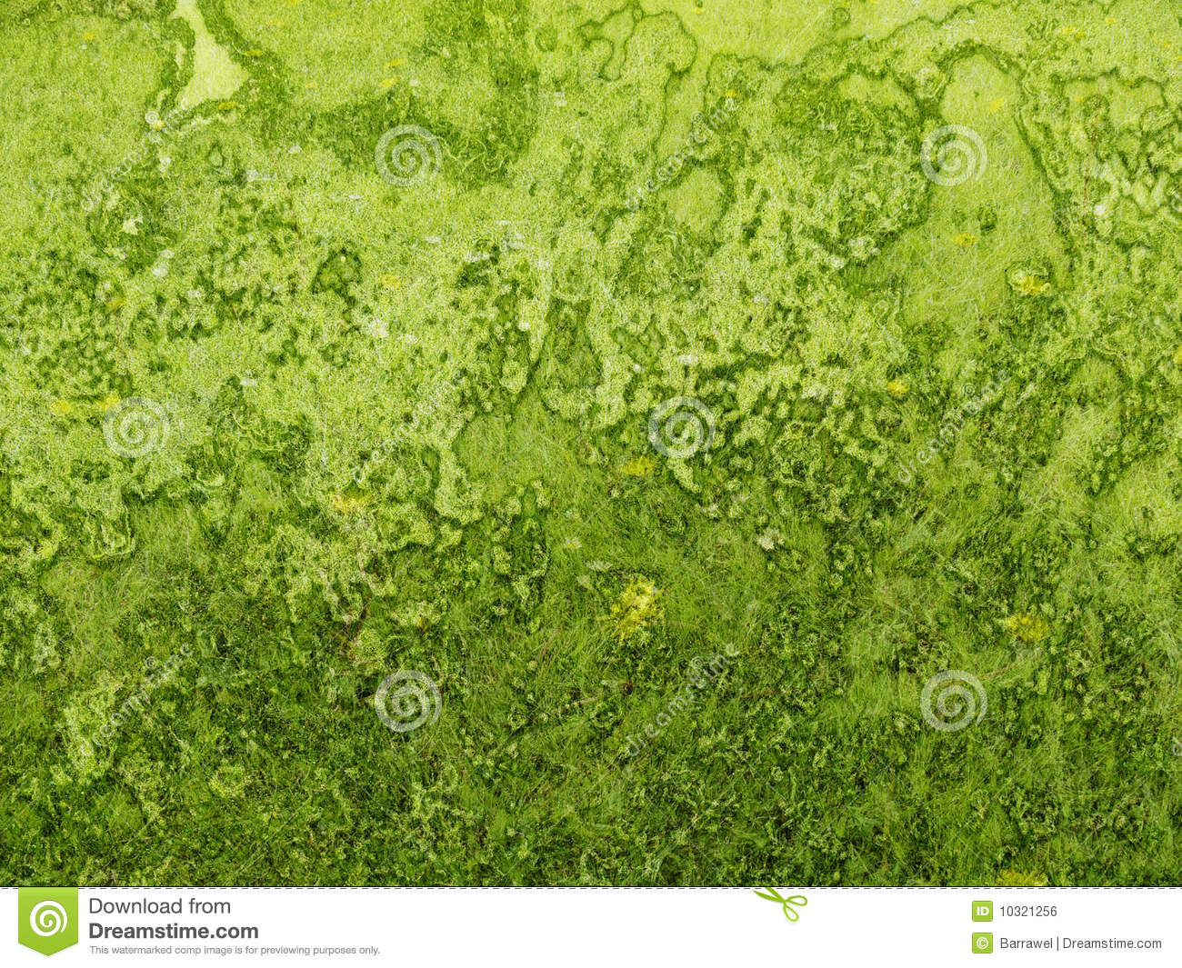 Rough Texture Background: Background Green Texture Rough Grass Royalty Free Stock