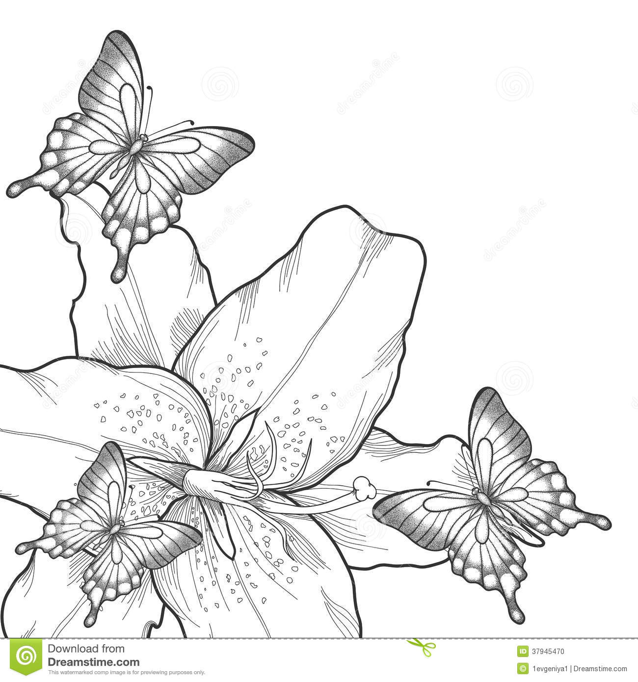 Contour Line Drawing Butterfly : Background for greeting card with monochrome black and