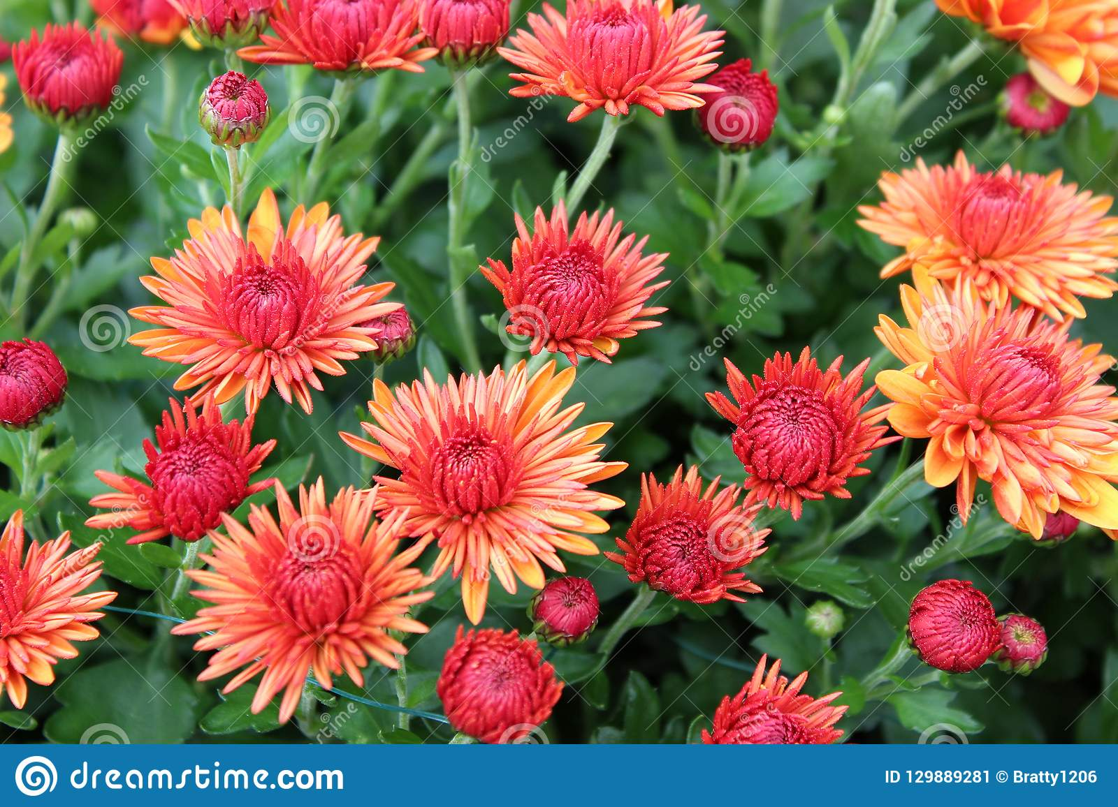 Background Image Of Beautiful Fall Flowers In Orange And Yellow