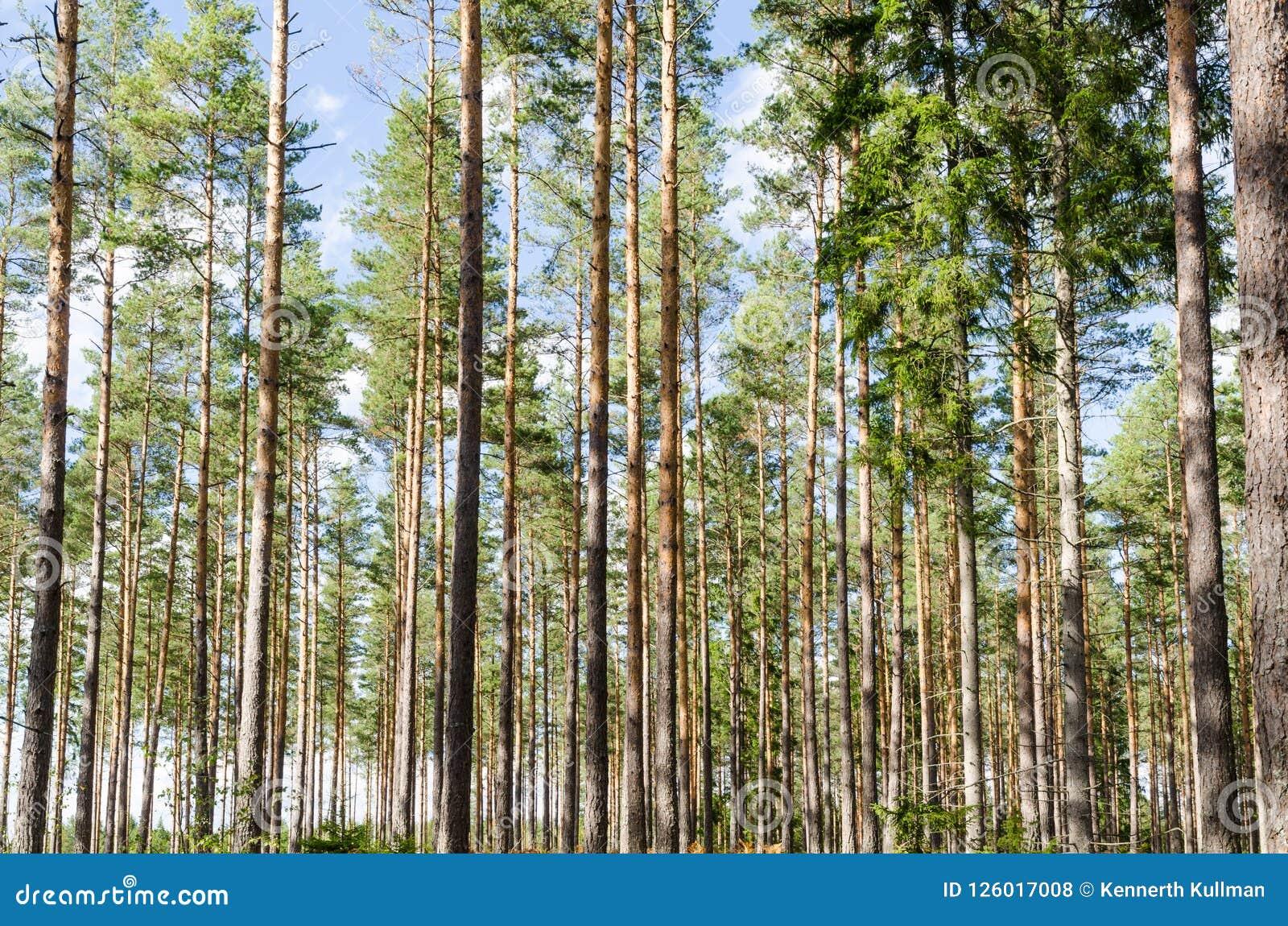 Beautiful Forest Background Image Stock Photo Image Of Beautiful