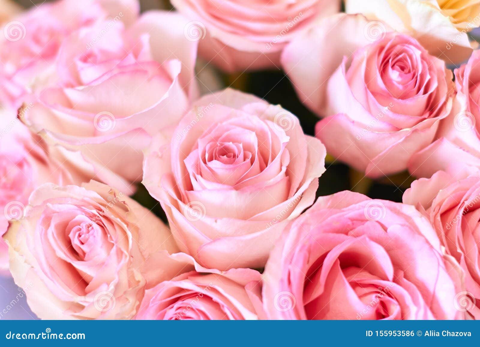 Background image of wonderful beautiful pink roses