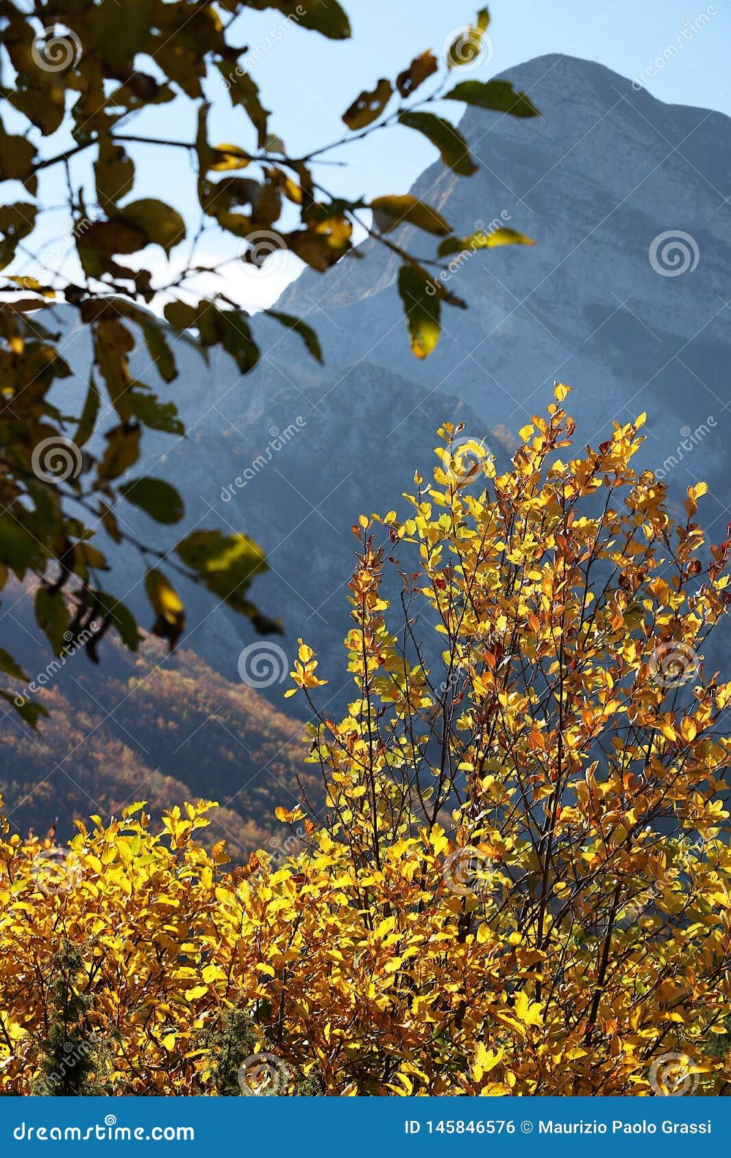 Alpi Apuane, Massa Carrara, Tuscany, Italy. Beech leaves in autu