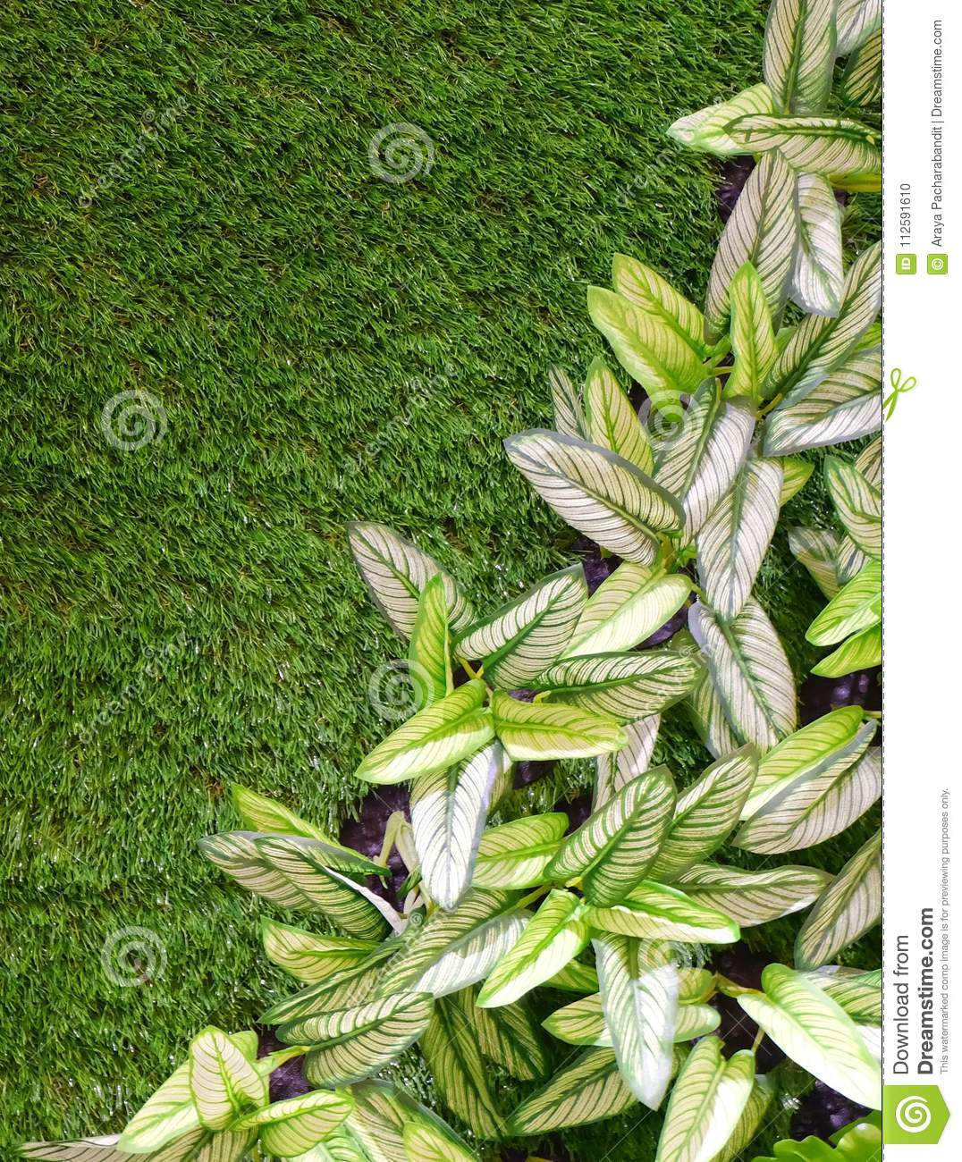 Artificial Dumb Cane or Dieffenbachia Plants on Green Grass