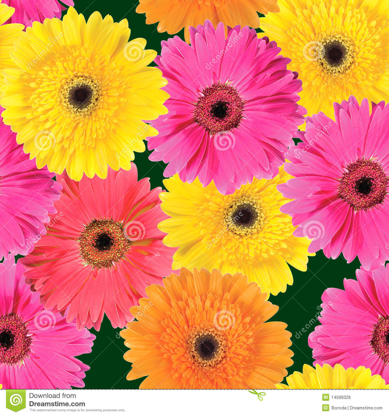 Background Of Pink Yellow And Orange Flowers Stock Photo Image Of