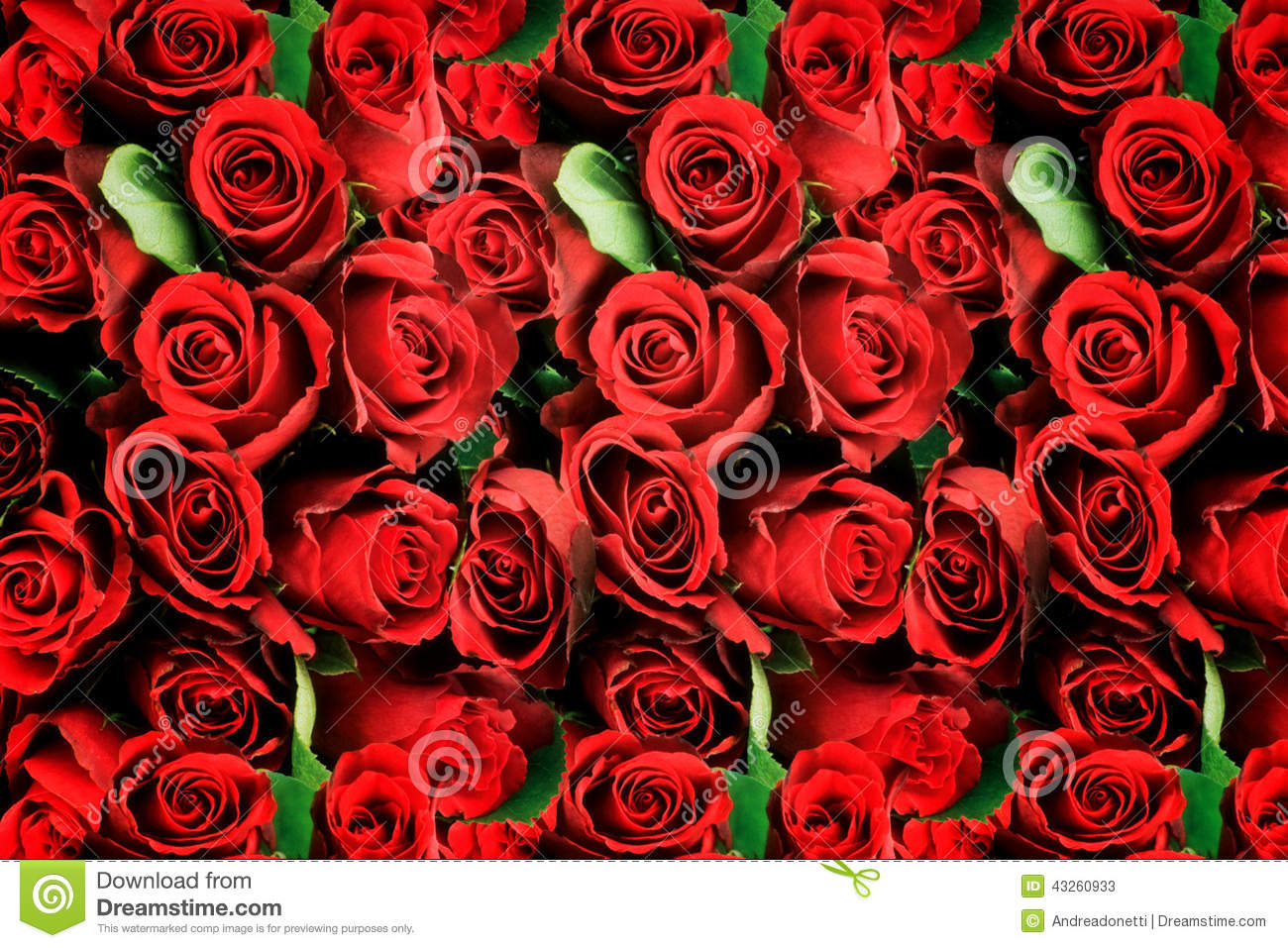 Background Of Red Roses Symbolic Of Love Stock Image Image Of