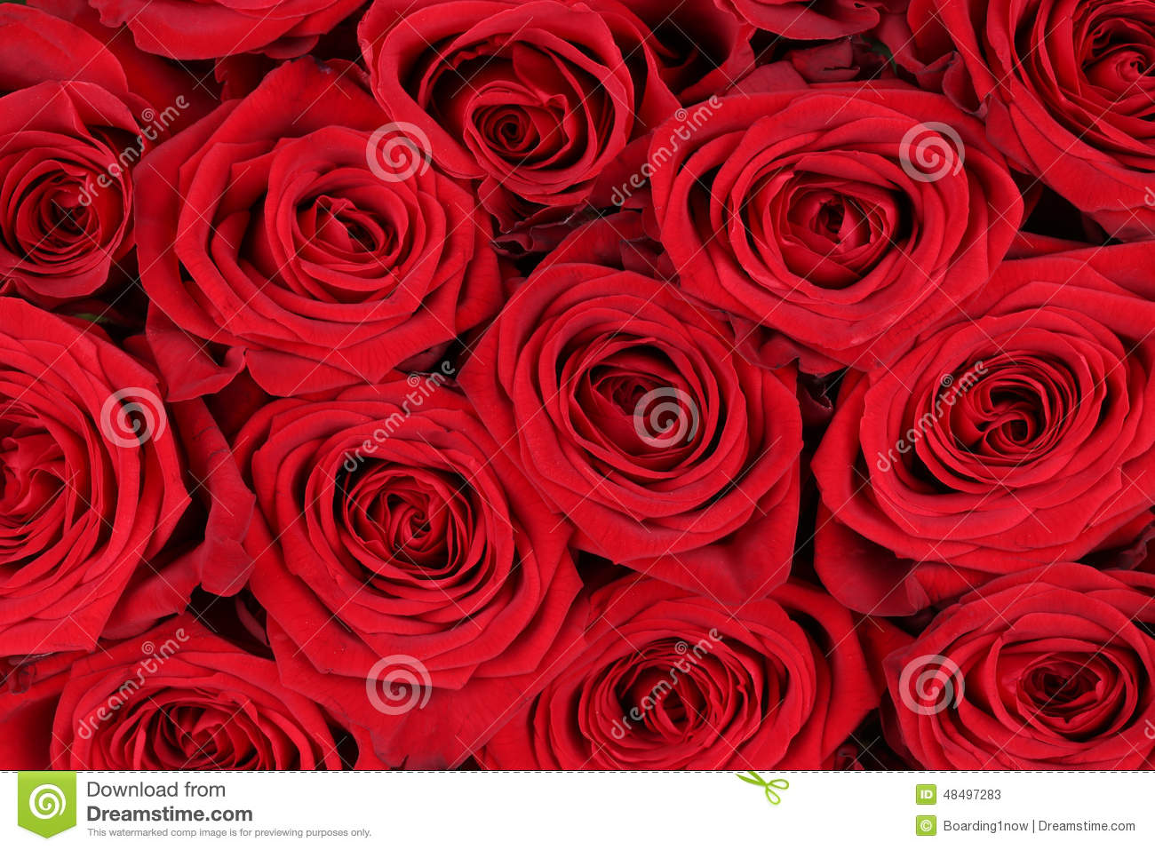 Background Red Roses On Valentine 39 S Or Mothers Day Stock