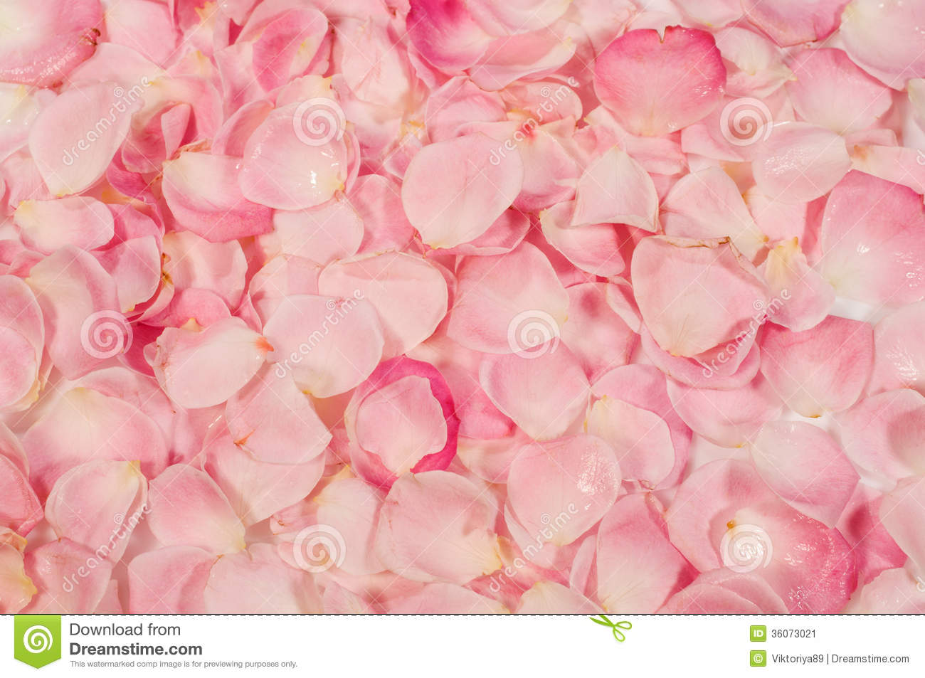 Background Of Rose Petals Stock Image  36073021