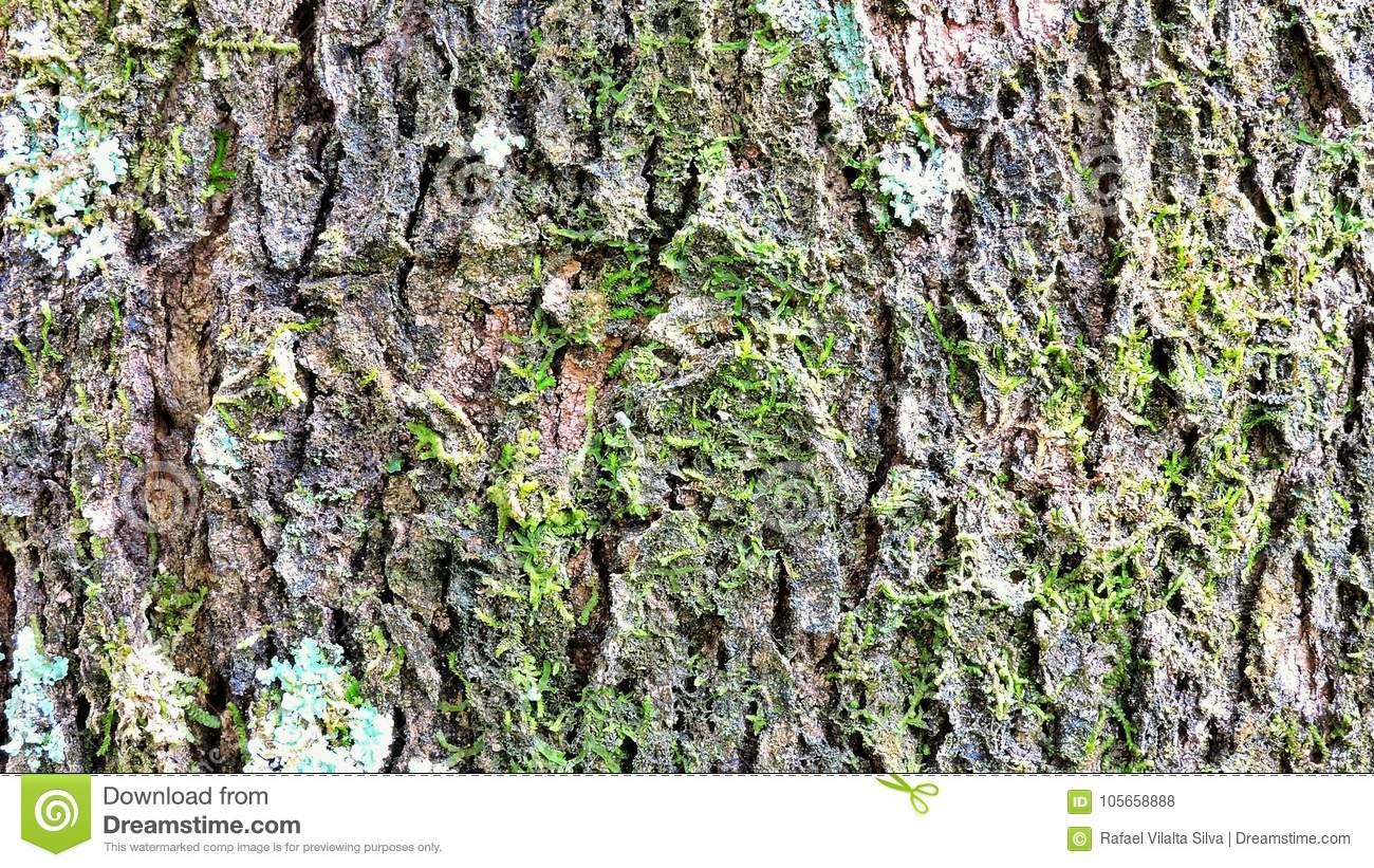 Background, Rough Wood Texture, Tree Trunk, Shades Of Brown, Rough ...
