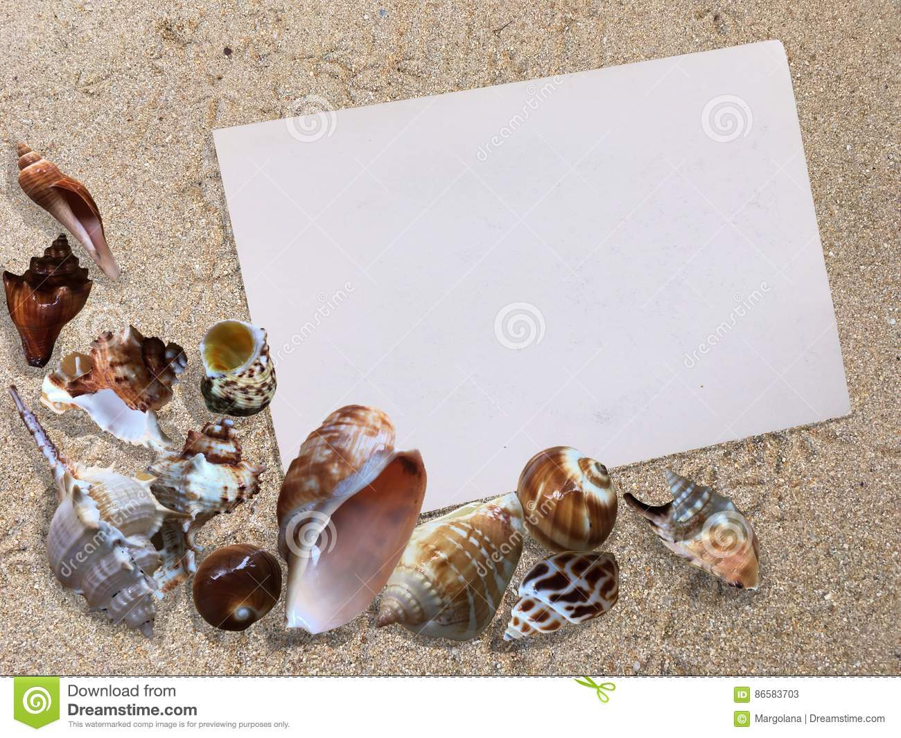 Background Of Seashells On The Beach Sand Background With
