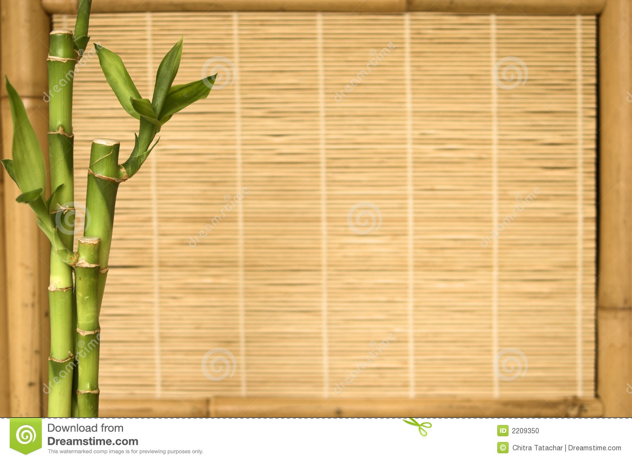 Background Series Bamboo Plant Stock Photo Image Of