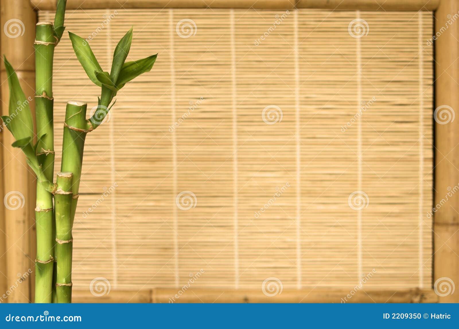 Background Series Bamboo Plant Stock Photo - Image: 2209350