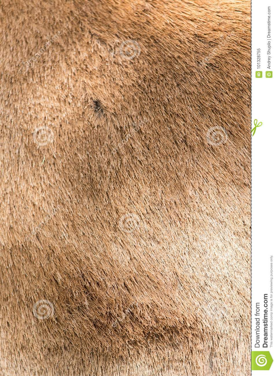 Background of sheep skins stock image. Image of mutton - 101328755 on dry sheep equivalent,