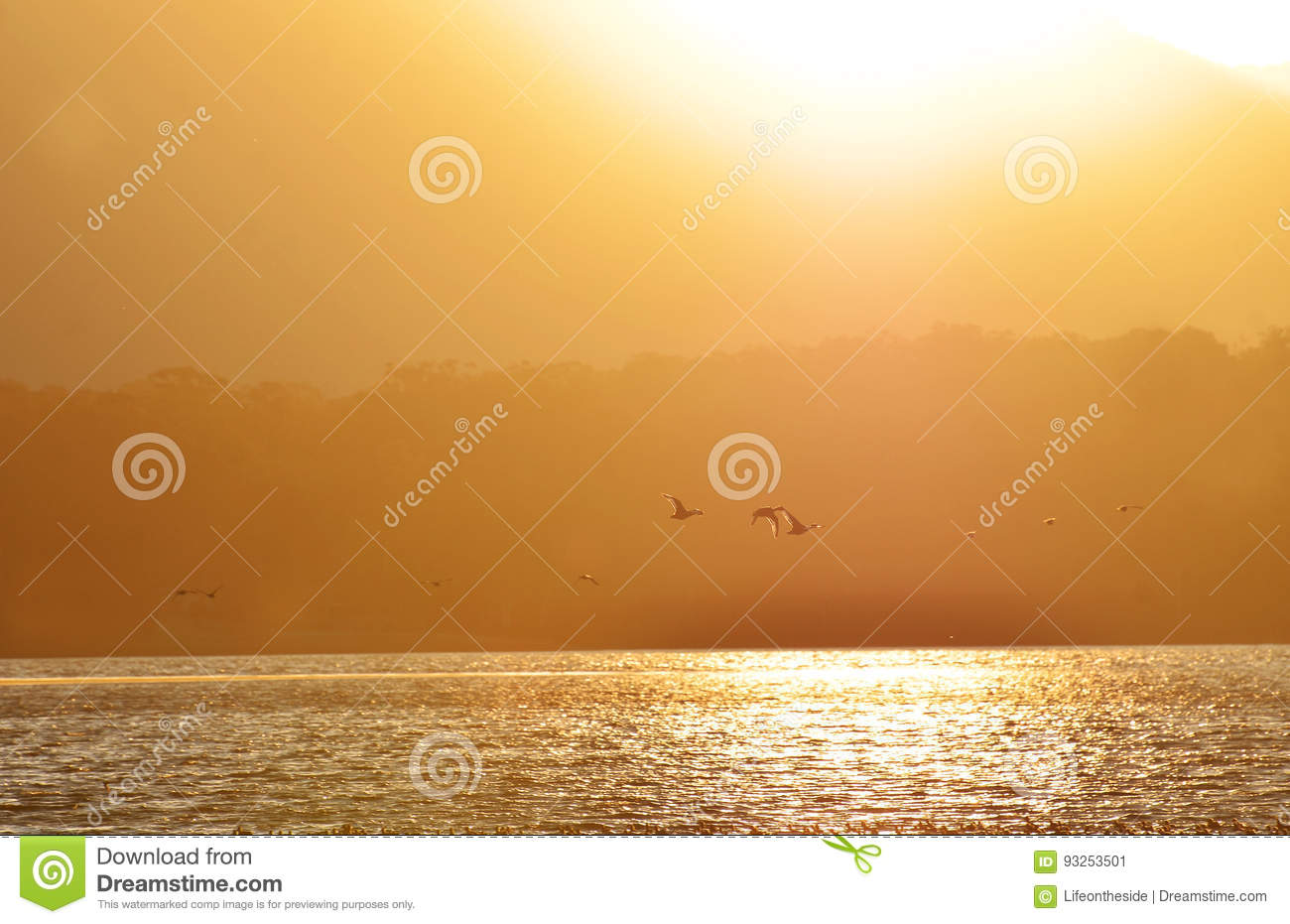 Background silhouettes of ducks flying in golden sunset lake