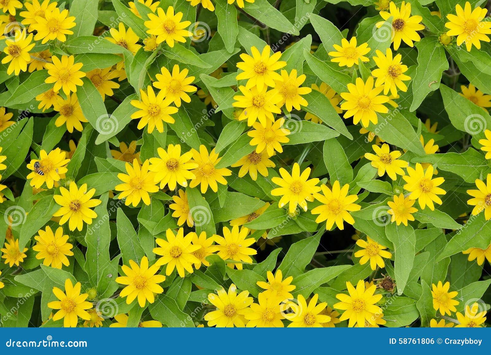 Background of small yellow flowers stock photo image of flower download background of small yellow flowers stock photo image of flower elegance 58761806 mightylinksfo